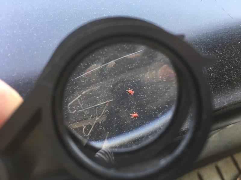 『タカラダニ』今年もヤツらがやってきた!!ベランダに巣食う赤い虫
